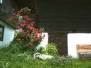 Krönhof mi Sommer_15